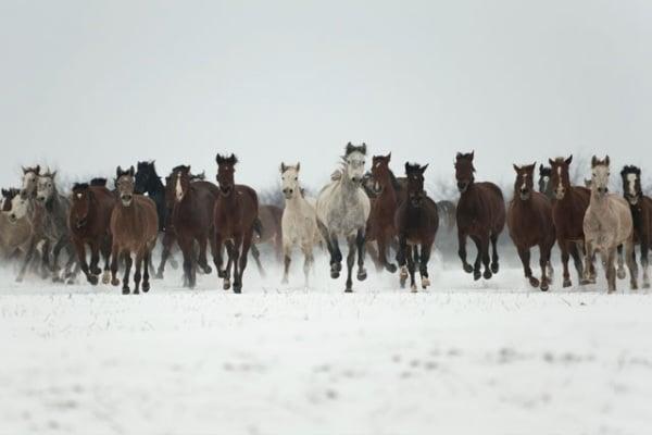 5 curiosità sui cavalli