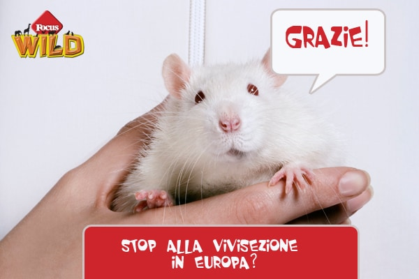 Curiosità animali: la Comunità Europea contro la vivisezione Focus Wild