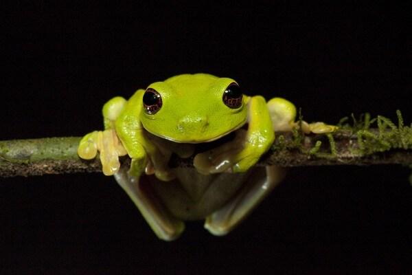 Notizie dai mondi perduti | Animali scoperti da poco