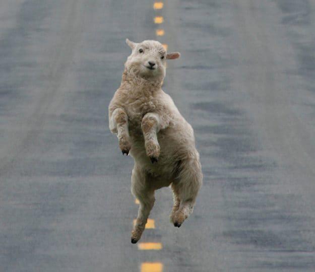 Curiosità animal: ecco gli animali più felici al mondo!