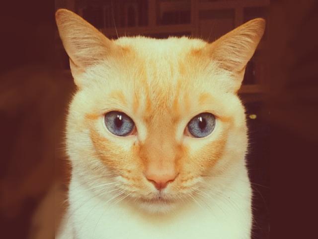 Ho fotografato il mio gatto con i filtri dell'app Snapchat e…