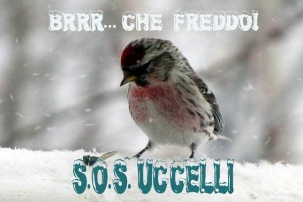 Freddo e neve sono arrivati | Aiutiamo gli uccellini selvatici!
