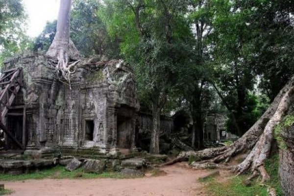 Potenza della natura | Quando la giungla è ribelle e incontrollabile (GALLERY)