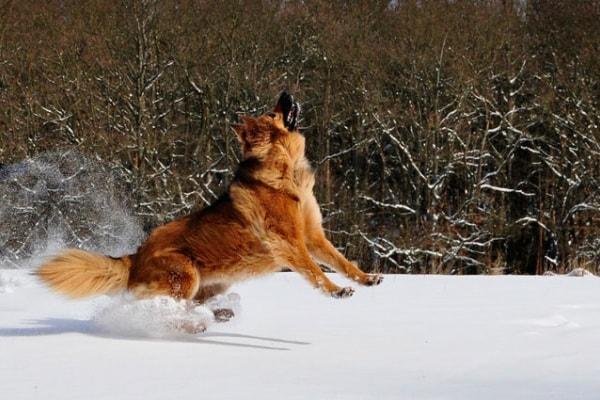 Video divertenti | L'equilibrista sulla neve e altri cani buffi