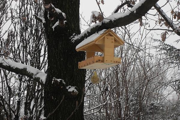 Freddo E Neve Sono Arrivati   Aiutiamo Gli Uccellini Selvatici!