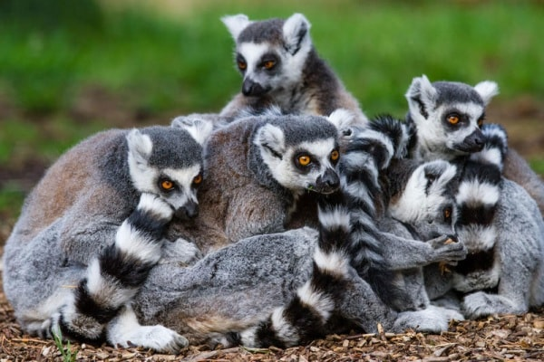 Madagascar: 20 curiosità che forse ancora non sai