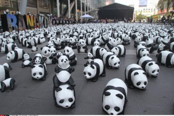 Invasione di panda a Bangkok!