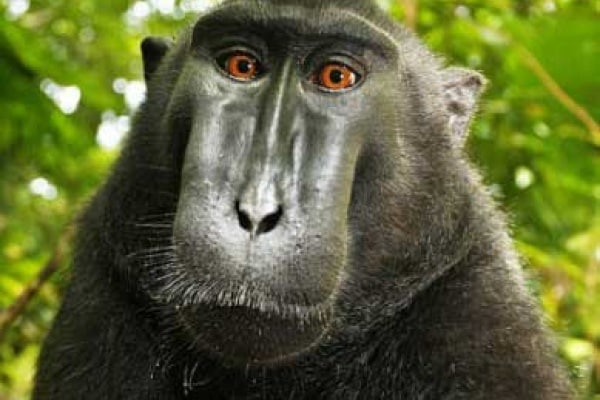 Al macaco piace l'autoscatto!