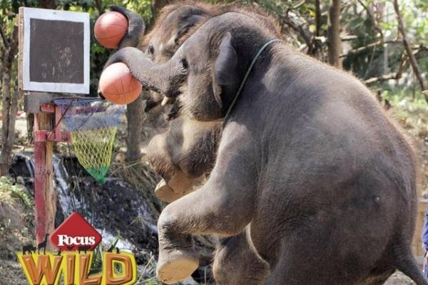 Curiosità animali: gli sport più assurdi fatti con animali | Focus Wild