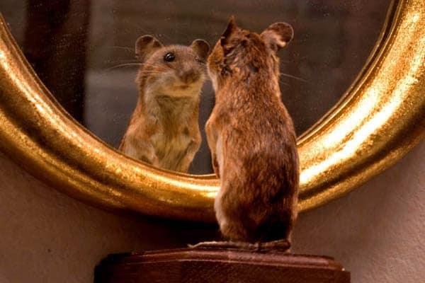Lo sapevi che | Com'è fatto uno specchio?