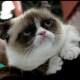 """Grumpy cat è in buona compagnia: gli altri animali """"imbronciati"""" / Image 1"""