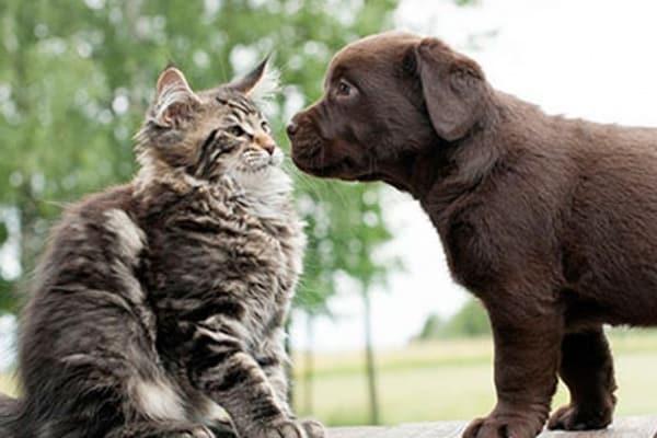 Cane contro gatto: secondo te chi vince?