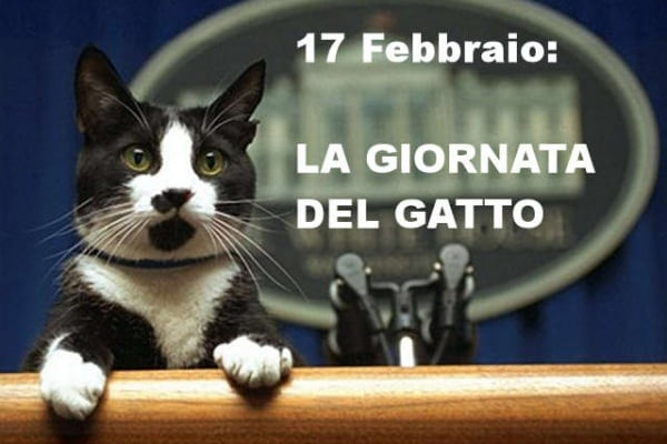 17 febbraio: la rete festeggia la giornata del gatto! [+sondaggio]