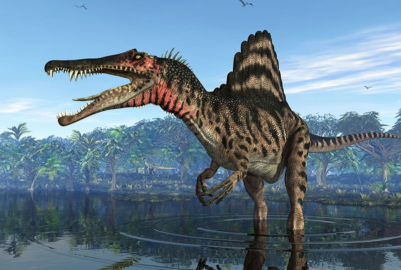 Il ritorno del mostro: lo scheletro completo di uno Spinosaurus in esposizione a Berlino