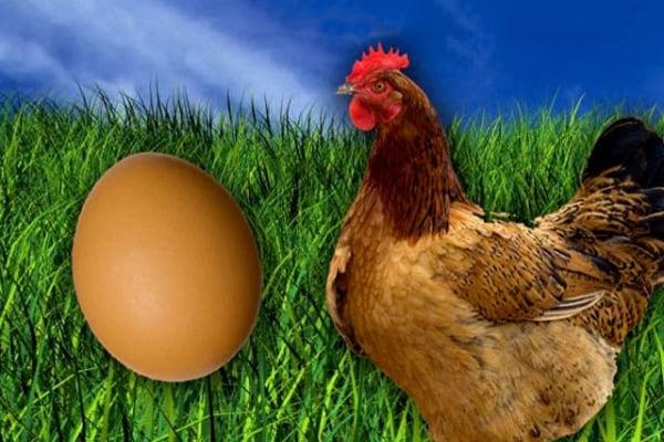 Lo sapevi che | È nato prima l'uovo o la gallina?