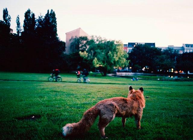 Animali selvatici in città