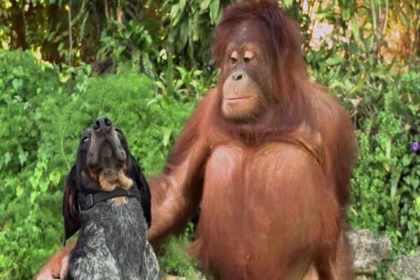 [Video] Gli animali giocano insieme sulle note di Robin Hood