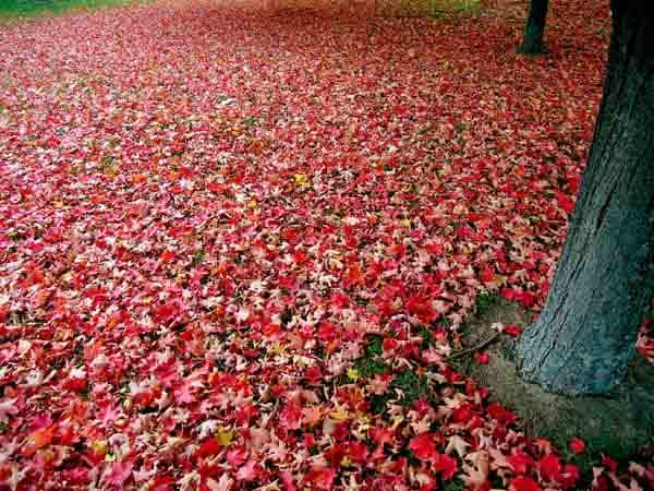Scopri segreti dei colori delle foglie! Focus Junior
