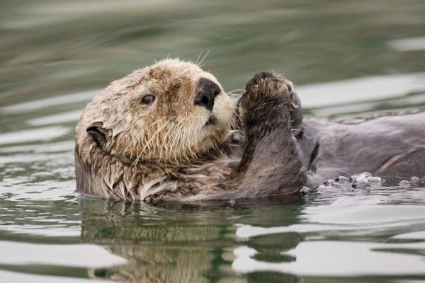 Come mai, in acqua, i corpi sono più leggeri? | Lo spiega Archimede!