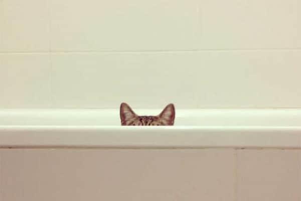 I gatti Ninja: le tecniche dei gatti per diventare invisibili