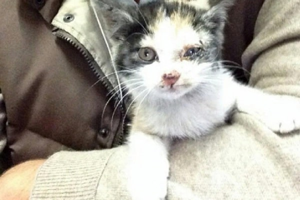 La polizia chiude l'autostrada per salvare una gattina!