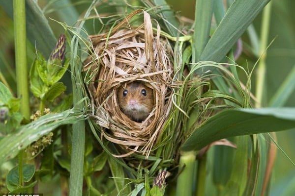 La vita segreta del topo di campagna