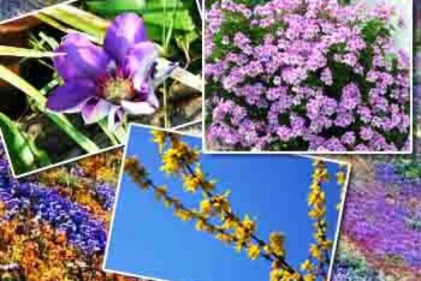 Primavera: terza gallery con le vostre foto!