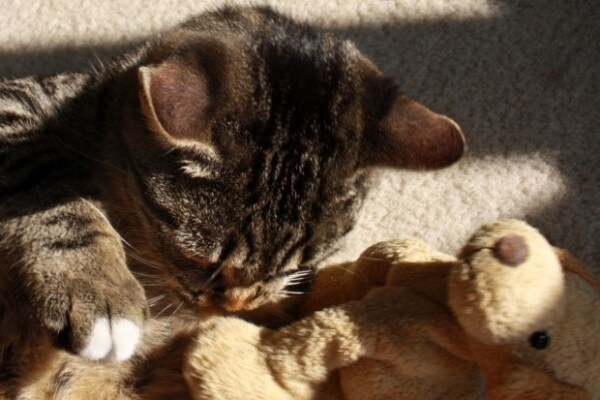 Curiosità animali: anche gli animali hanno il loro peluche!
