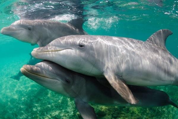 Ultrasuoni, il linguaggio segreto dei delfini
