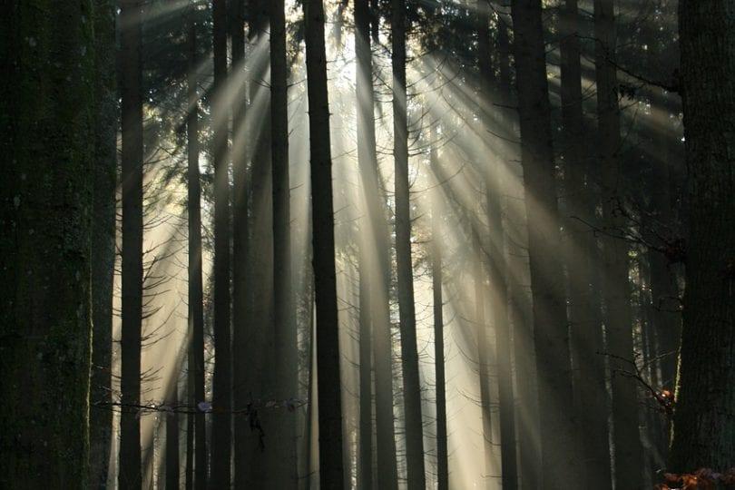 Immagina di essere in un bosco…