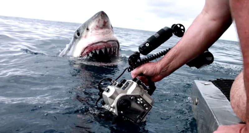 Australia: trovati i denti di un enorme squalo preistorico