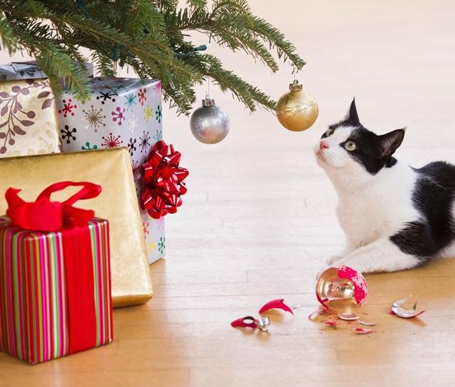 Immagini Divertenti Animali Natale.Video Divertente Il Cane Distrugge L Albero Di Natale E Poi Focus Junior