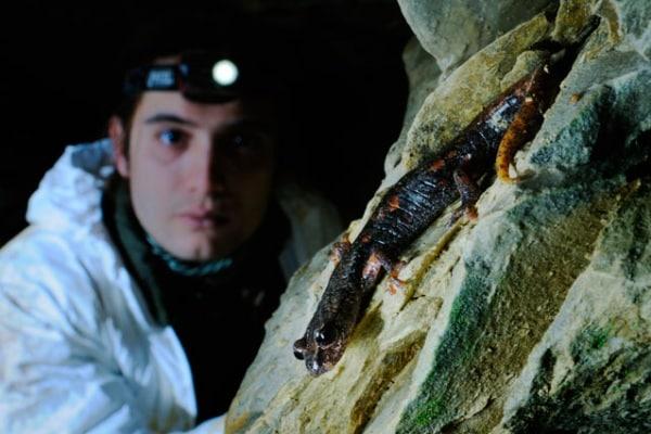 Un anfibio nostrano: il geotritone italiano!