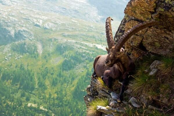 Lo stambecco non soffre di vertigini!!!