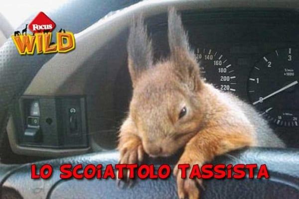 La straordinaria amicizia tra lo scoiattolo e il tassista