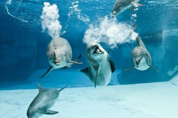 Lo sapevi che | I delfini provano sentimenti?