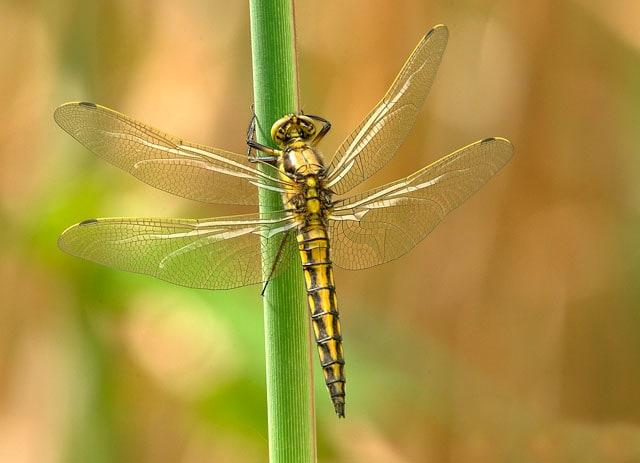 Alla scoperta dei simpatici insetti estivi