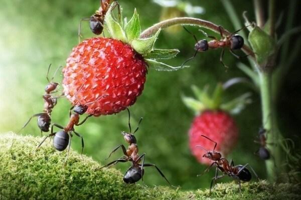 Curiosità animali: le formiche in posa!