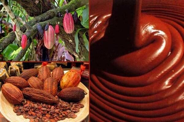 Come si produce il cioccolato?