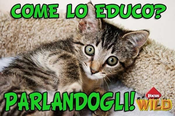 Curiosità animali | Come si educa un gatto? Parla con lui!