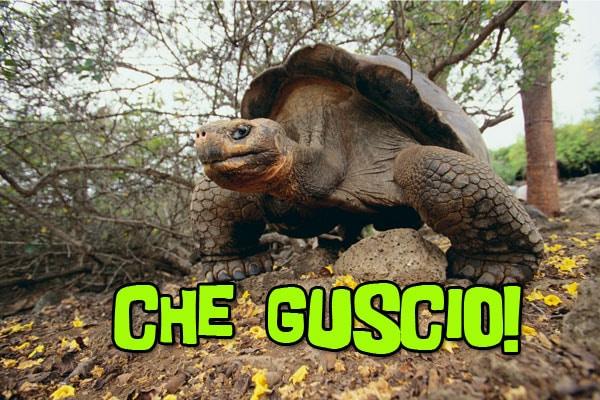 Perché la tartaruga ha il guscio?