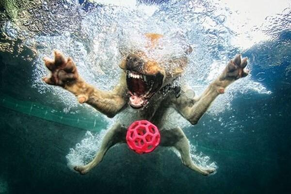 Curiosità animali: Cani o pesce-cani? Cani sott'acqua | Focus Wild