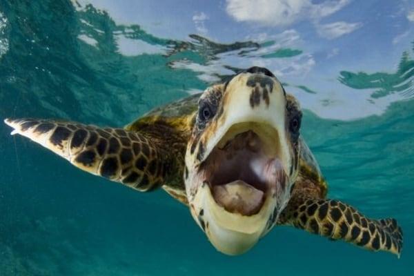 Curiosità animali: il sorriso degli animali | Focus Wild