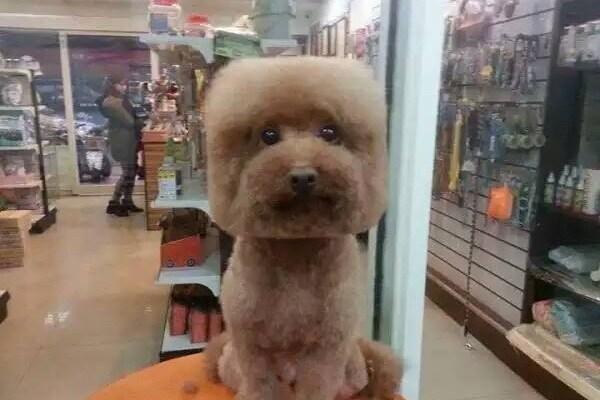 Ultima moda a Taiwan: tagliare il pelo dei cani a forma di cubo o sfera perfetti