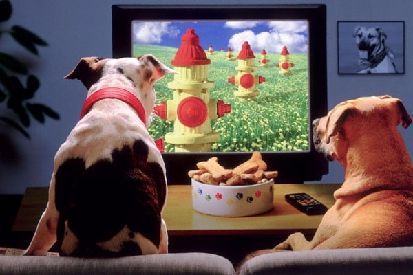 I cani guardano la televisione?
