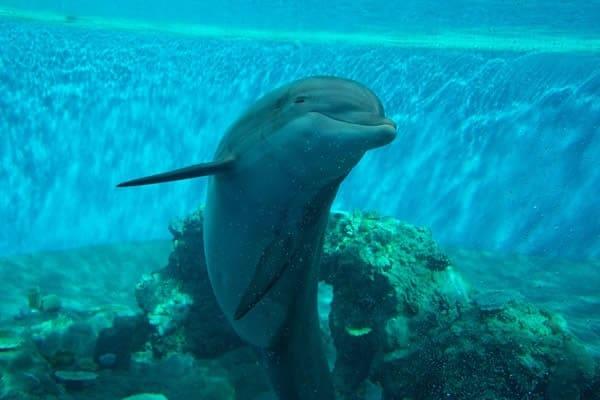 Delfini: tante curiosità per conoscere al meglio questi animali straordinari!