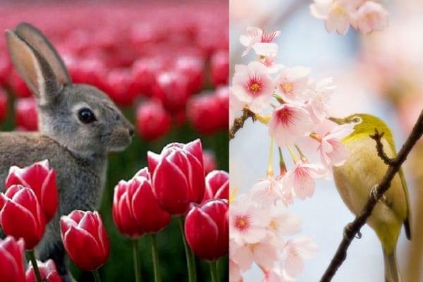 Equinozio di primavera: arrivano i fiori e le giornate più lunghe!