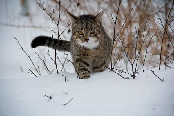 Gli animali non temono la neve