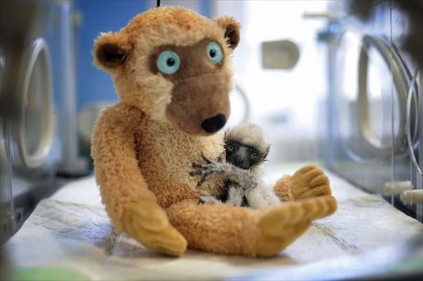 Curiosità animali | I cuccioli più teneri