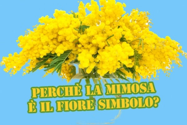 Festa della donna | Perché l'8 marzo si regalano le mimose?